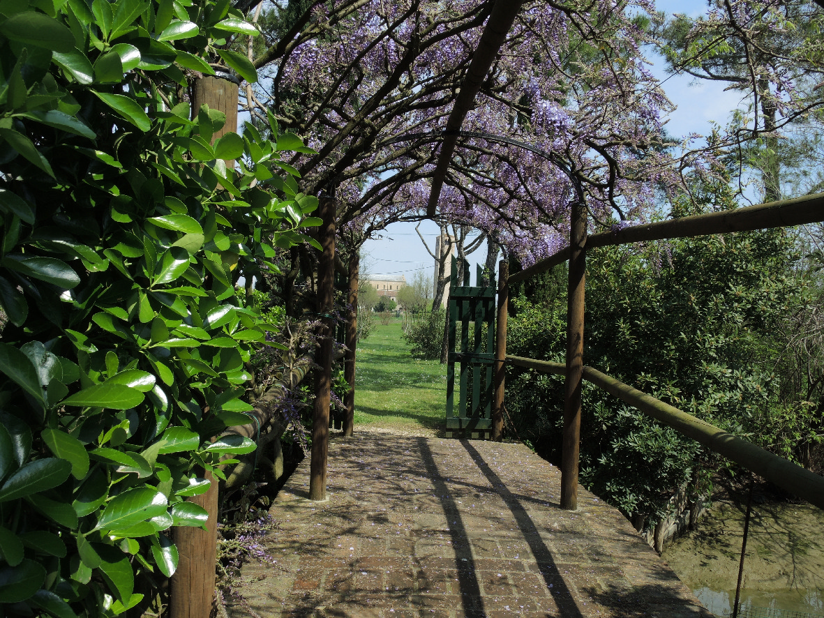 A small bridge in Torcello covered with wisteria