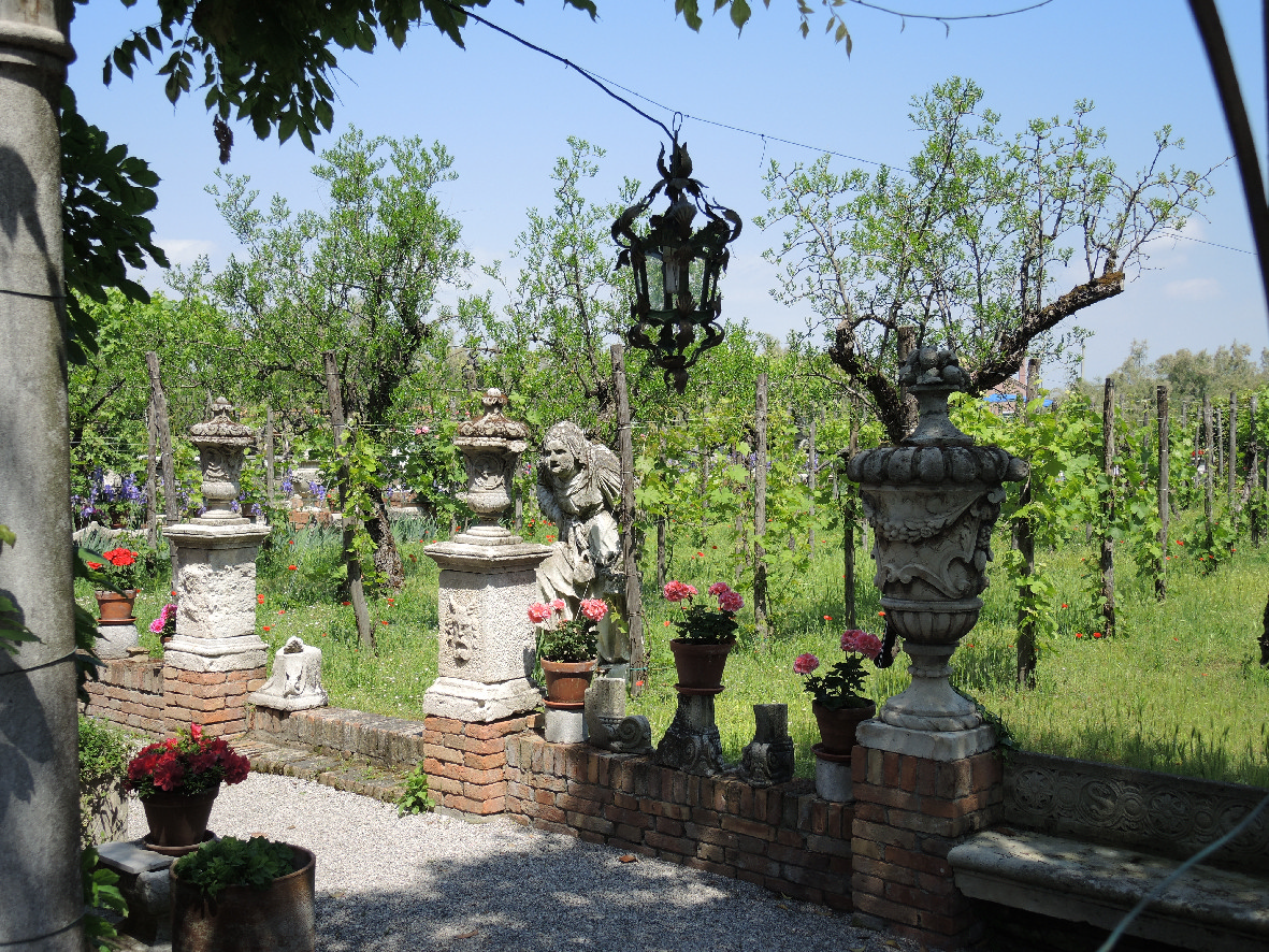 A vineyard in Torcello